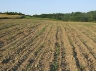 Sporna gradnja tvornice float stakla na poljoprivrednom zemljištu