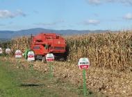 Do 16 tona suhog zrna kukuruza po hektaru