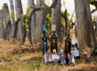6 milijuna kuna potpore regionalnim organizacijama vinara i vinogradara