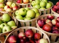20. listopada obilježavamo Svjetski dan jabuka